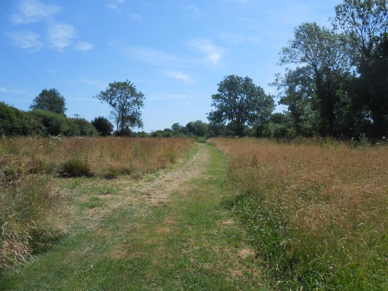 Walk to the lake across the meadow adjacent to the cottage full of butterflies in the summer