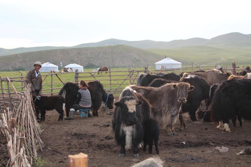 Mongolian nomadic family in Ulaanbaatar, holiday rental in Mongolia