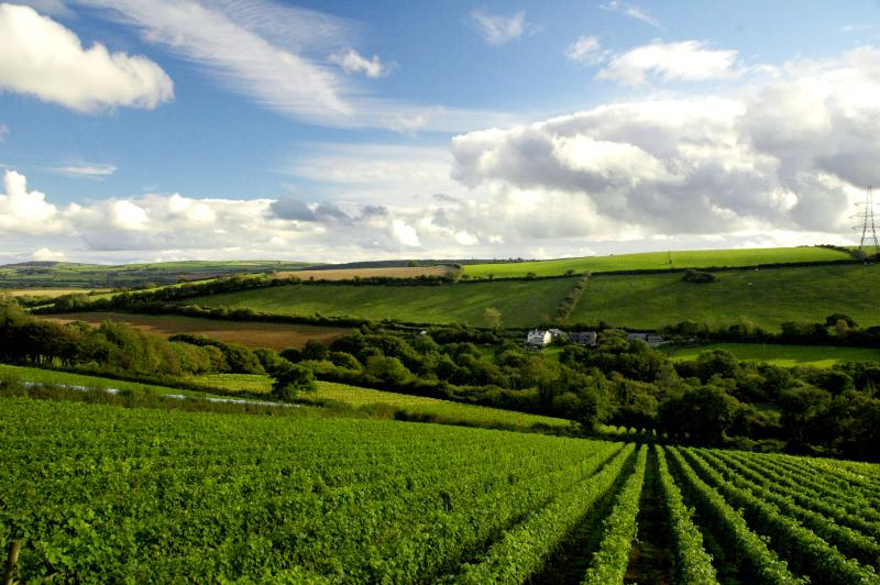 View of Butterwell from the Camel Valley Vineyards