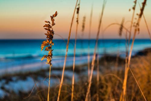 SAINT SIMONS ISLAND BEACH