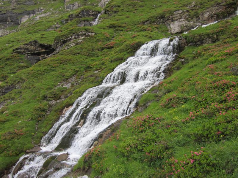 Bergbach mit Alpenrosen