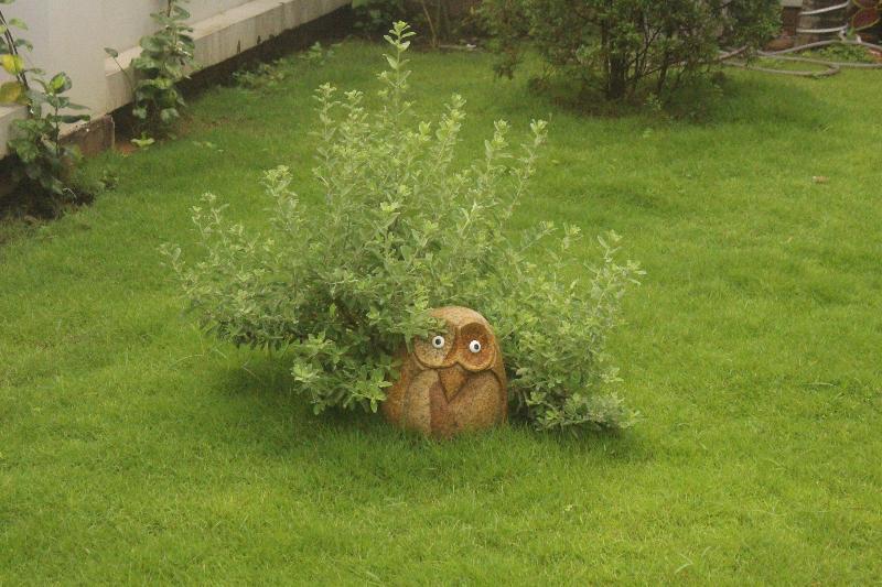 Little Owl in Our Garden
