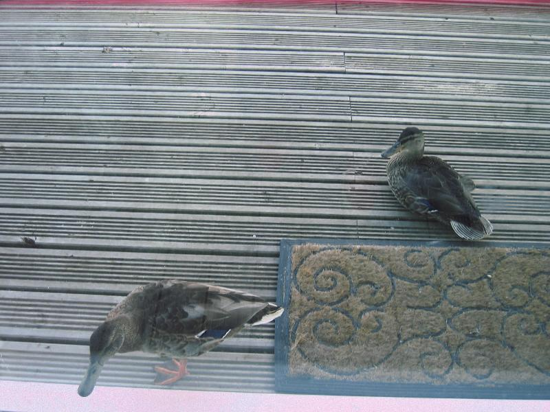 Visitors from the nature research on the doorstep!