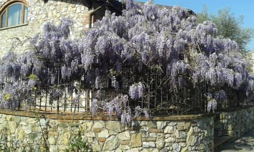 B&B Pietra e Glicine, holiday rental in Montecatini Terme