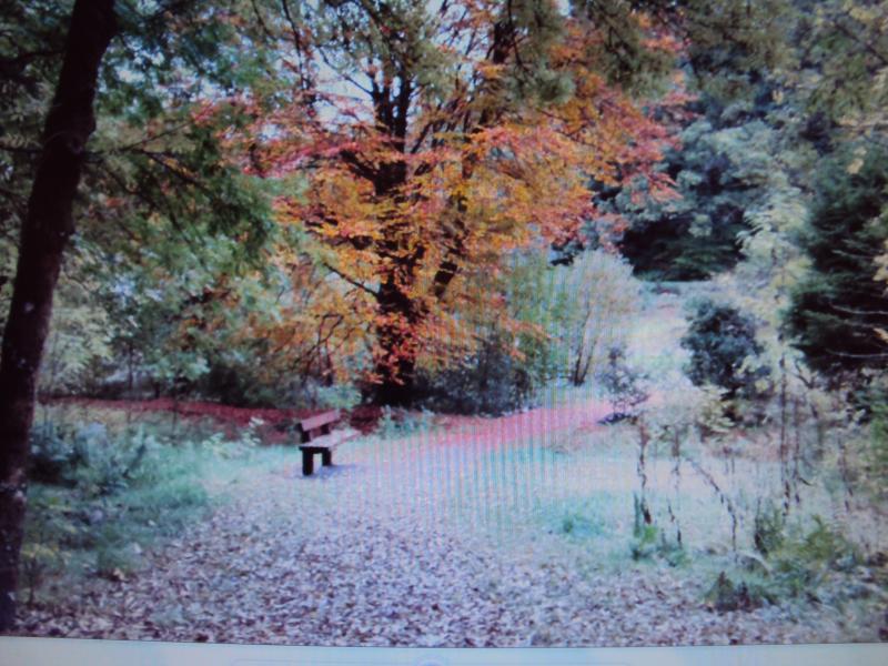 Autumn near the cottage