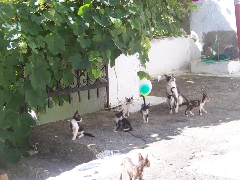 The yard-enjoy the cats and relax by the vineyard