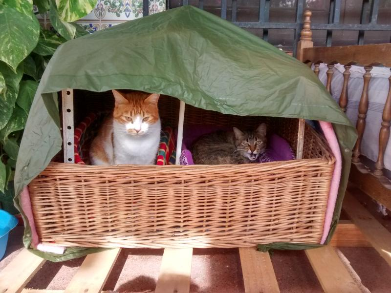 The family cats in their casita!