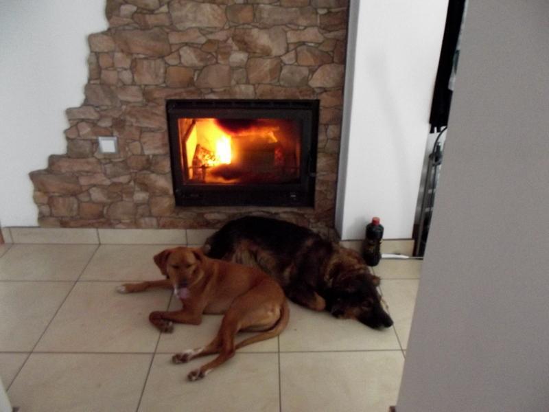 Timmy und Lisa, die Hunde  der Casa Joanita