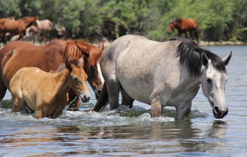 Wild horses down at the river (9 miles away)