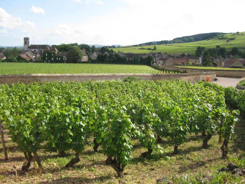 The village of Pommard through the vines