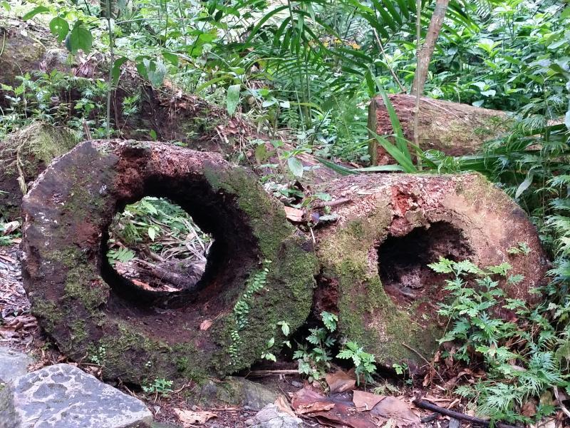 Fallen Trees In El Yunque