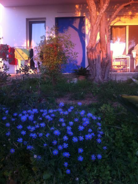 Fleurs de printemps - face à Apt Studio.
