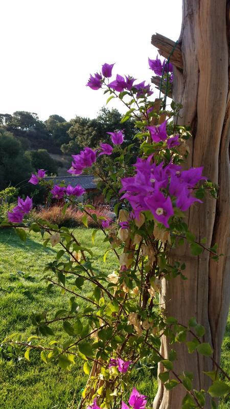 B&B Isole di pietra: the garden