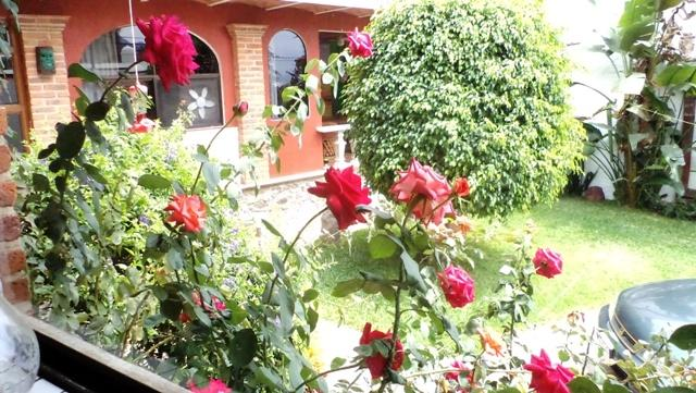 Roses viewed from Kitchen Window
