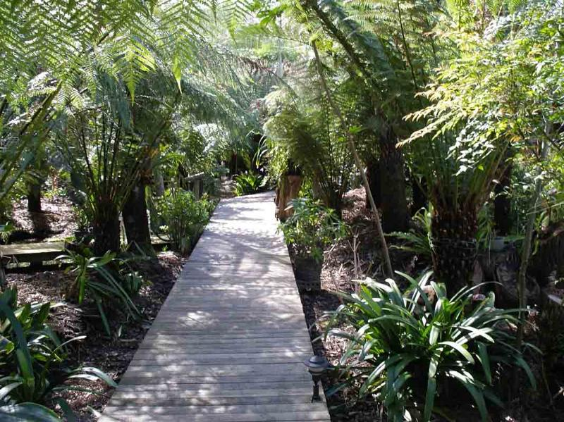 Boardwalk in the garden