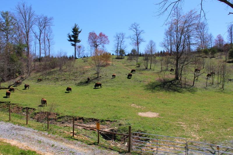 Dit is de mening van de koepel venster, de bizons zwerven in het veld!