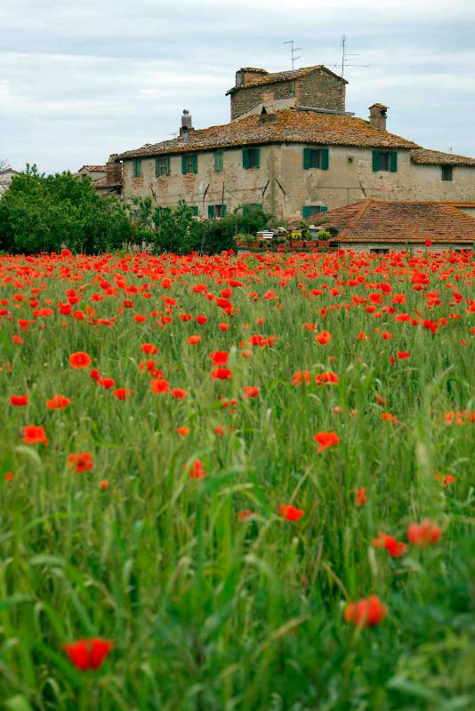 may in the countryside with poppies