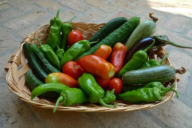 Our organic vegetables