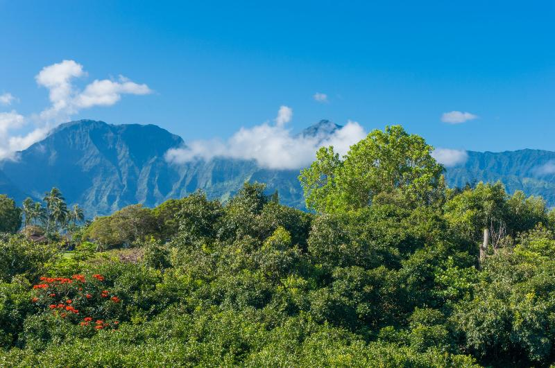 Awesome Waterfall View, Walk To Beach!, vacation rental in Princeville