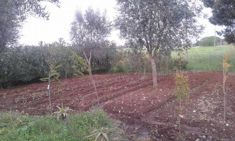 orticello biologico:  melanzane zucchine pomodori