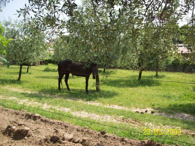 "Mi caballo ""Wise Boy"""