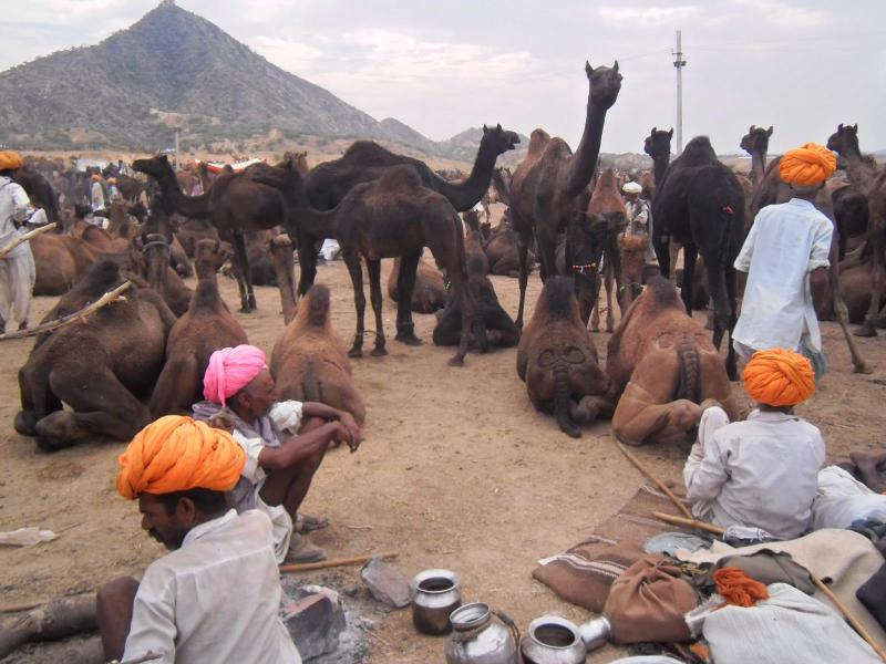 Travel With Tony, holiday rental in Ajmer District