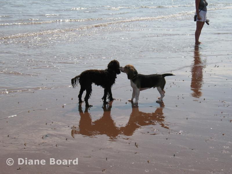 Goodrington Sands North beach is dog friendly all year, whilst the South beach is kept for children.