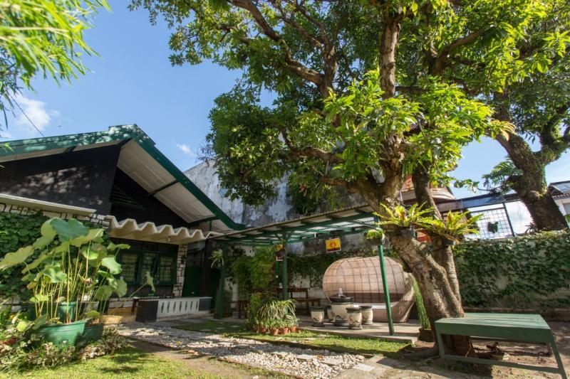 Mango Tree Dipudjo garden