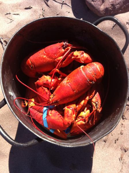 Island favourite ; fresh lobster dinners nearby or cook your own in our outdoor fire pit