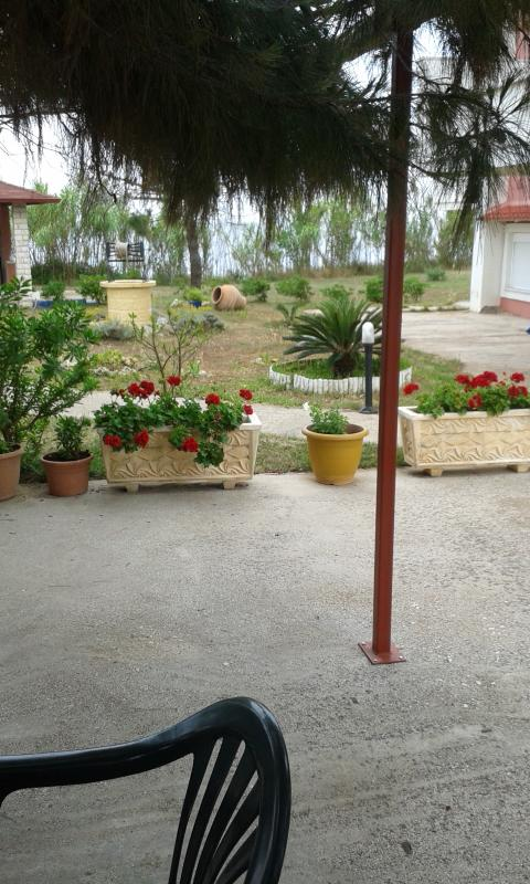 part of the courtyard(2)