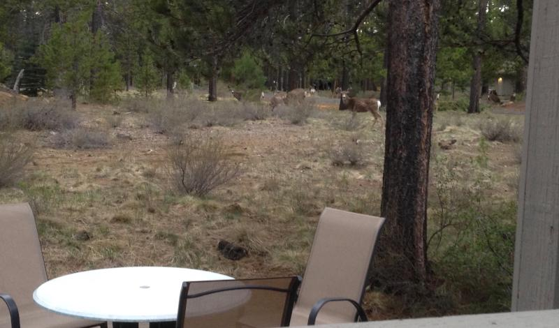 wild life near back deck crossing into sunriver from the national forest