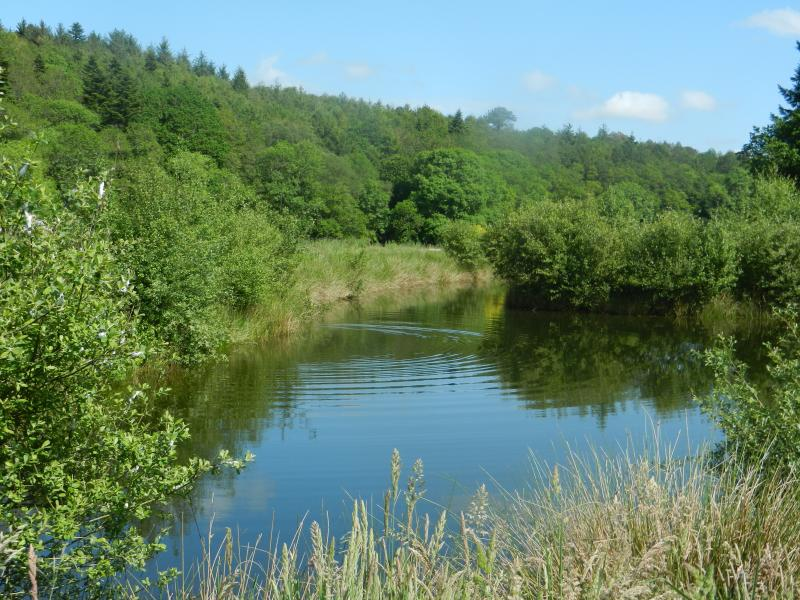 Our meadow and Trout pond