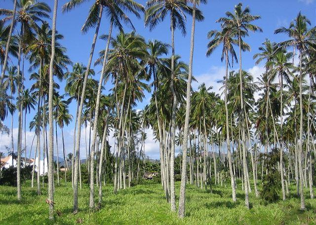 Coconut Grove next to Village Manor