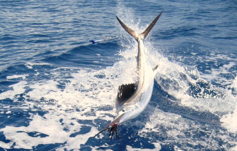Deep Sea Fishing Charters from IOP Marina