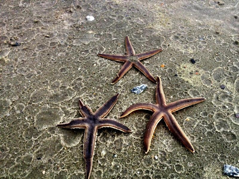 Try and find some starfish beneath the waves!