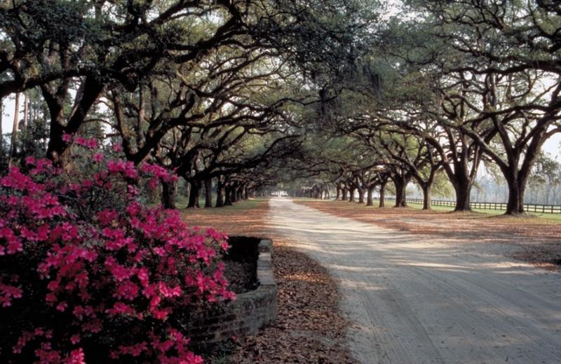 Historic Boone Hall Plantation, Only 15 Minutes!
