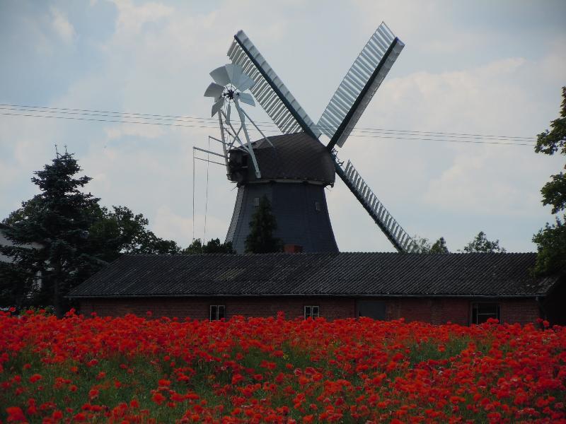 Windmühle in der Probstei