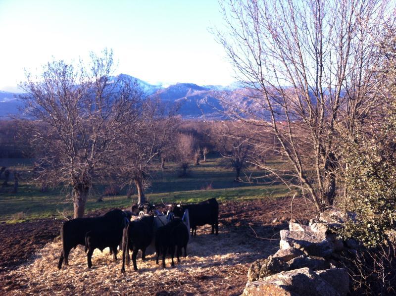 Dehesas in 'Cañada Real Segoviana' and 'Sierra de Guadarrama'