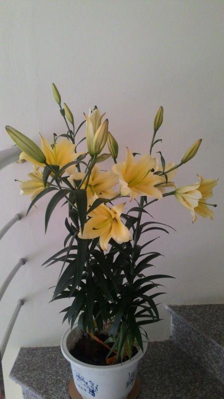 Flower on Tet holiday