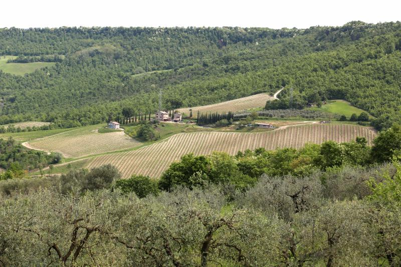 Location in the middle of vineyards