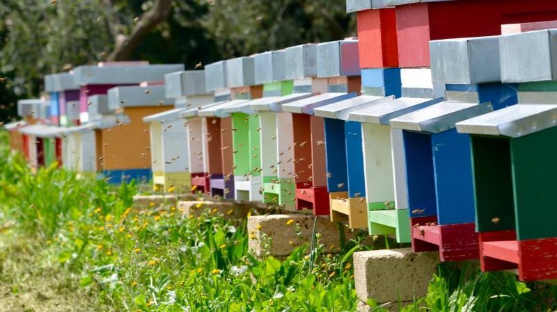 le nostre api