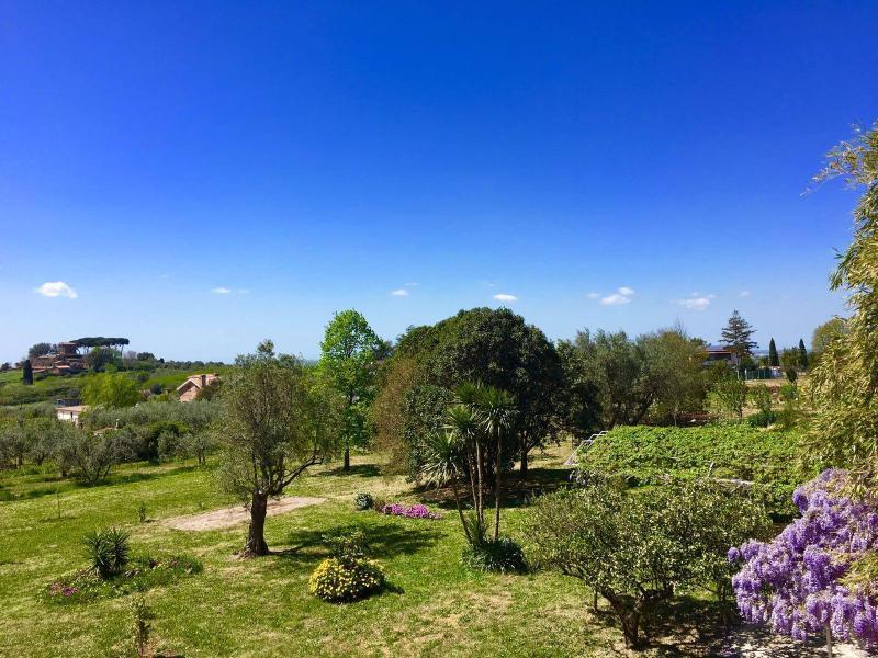 Il parco con piante e olivi secolari