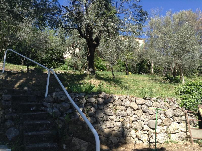 Rear garden with olive trees