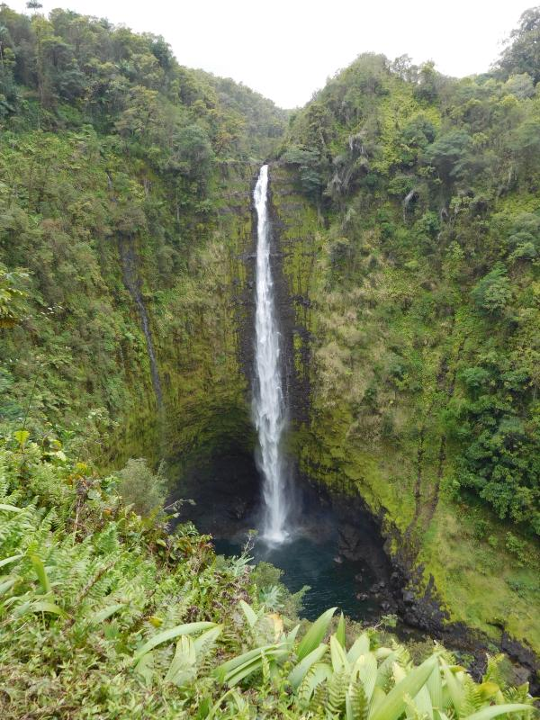 See Akaka Falls over on the Hilo side of the island.