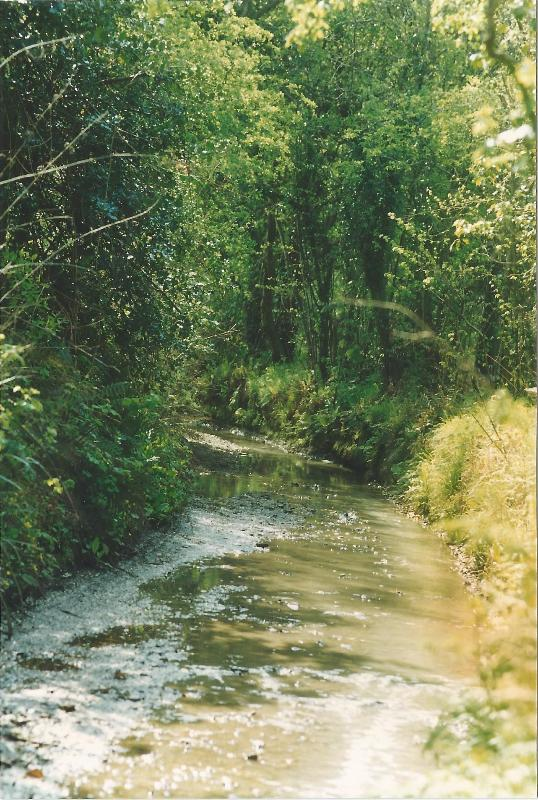 Stream Lane and the Saxon Shoreway