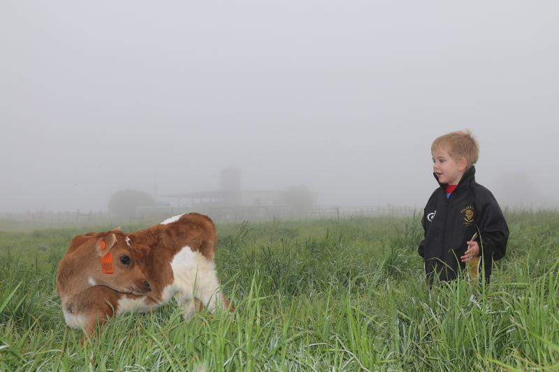 Meet the calves