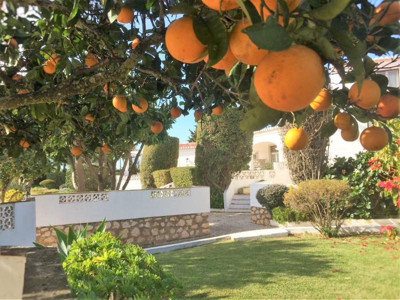 Orange and Lemon trees in Beachcomber garden.