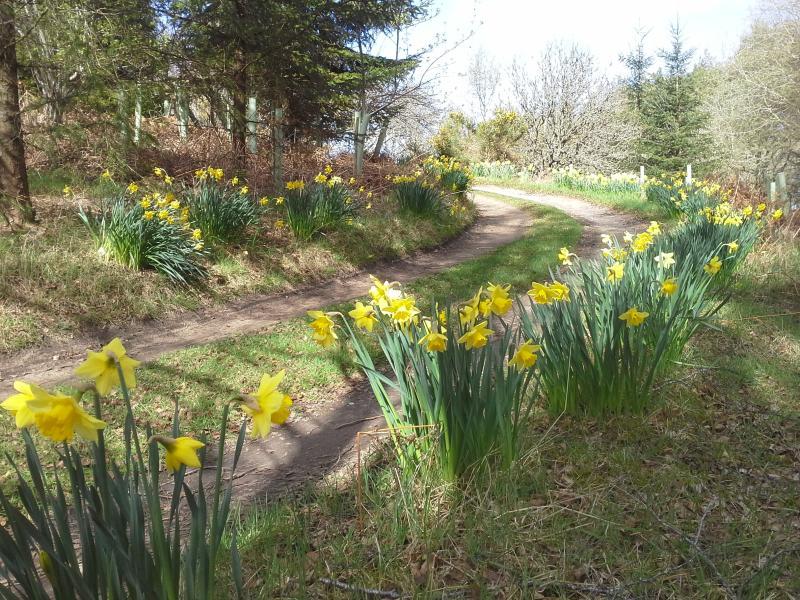 Marcher au printemps