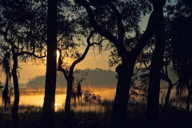 Sunrise through the Spanish Moss at the Retreat