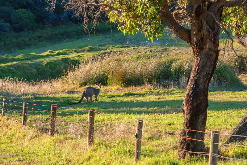 You can watch the kangaroos grazing from your balcony at Pearl River House